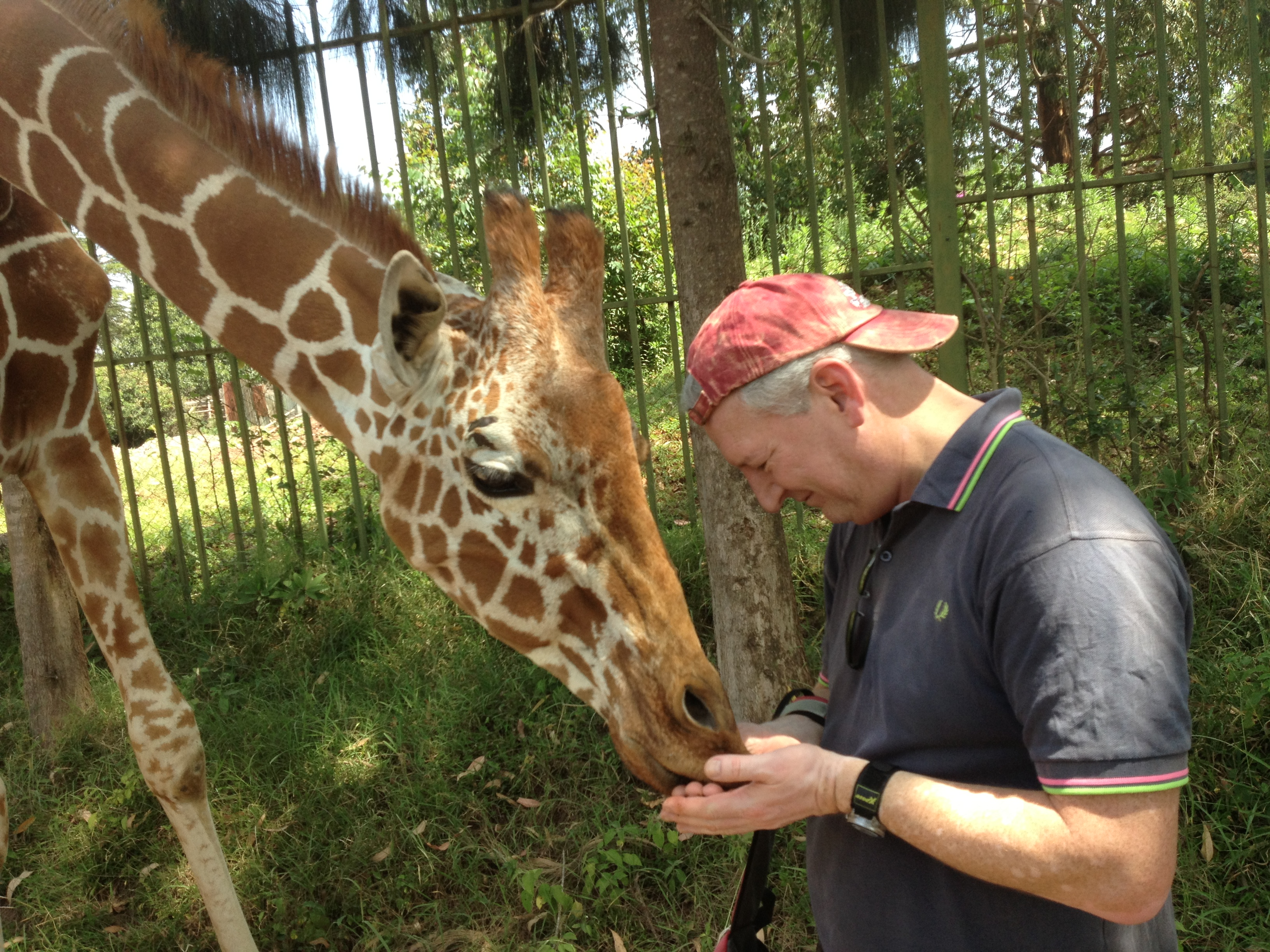 Cintra CEO Carsten Staehr feeding a giraffe during a break in the cycle ride